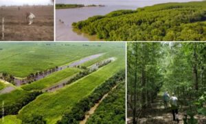 Mississippi Alluvial Valley Project
